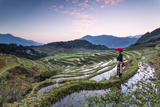 Vietnam  Sapa Red Dao Woman on Rice Paddies at Sunrise (Mr)