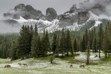 Horses Grazing in the Meadow Blanketed in Summer Snow  Dolomites  Alto Adige or South Tyrol  Italy