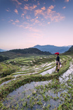 Vietnam, Sapa. Red Dao Woman on Rice Paddies at Sunrise (Mr) Papier Photo par Matteo Colombo