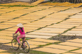 Cycling Past Drying Sheets of Mien Noodle  Nr Hanoi  Vietnam