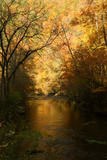 Golden foliage reflected in mountain creek  Smoky Mountain National Park  Tennessee  USA