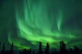 Aurora Borealis at Chena Hot Springs  Fairbanks  Alaska  Usa