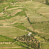Portugal  Douro  Terraced Vineyards and Farm