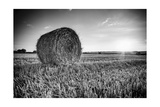 France  Centre Region  Indre-Et-Loire  Sainte Maure De Touraine  Straw Bale in Field