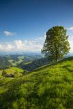 Emmental Valley  Berner Oberland  Switzerland