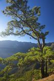 Parque Nacional De La Caldera De Taburiente  Mirador De Las Chozas  La Palma  Canaries  Spain
