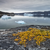 Greenland  Diskobay  Reefs  Sea with Icebergs