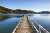 Picturesque Wharf in the Idyllic Kenepuru Sound  Marlborough Sounds  South Island  New Zealand