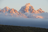 As the Grand Tetons Rise Out of the Clouds at Sunrise  a Pronghorn Watches from a Ridge Top