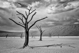 A Surreal Landscape of Dead Trees in a Clay Pan and Sand Dunes under a Cloud Filled Sky