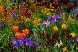 A Riot of Colorful Tulips  Irises and Other Flowers in Monet's Garden in Giverny