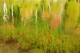 Bubble Pond with Grasses and Reflections of Fall Foliage