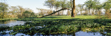 A Dense Mat of Invasive Water Hyacinth Choking the Surface of a Freshwater Lake