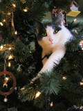 A Green-Eyed White and Grey Cat Lies in Branches of a Christmas Tree