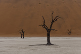 A Surreal Landscape of Dead Trees in a Clay Pan and Towering Sand Dunes