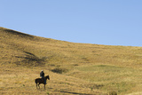 A Cowboy on Horseback in a Landscape of Rolling Hills During the Annual Bison Roundup