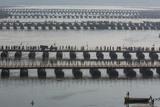 Temporary Pontoon Bridges That Allow Crowds to Get from Place to Place During Kumbh Mela