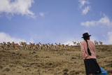 Quechua Women Spread Out on Hills and Create a 'Fence' as They Herd Wild Vicuna