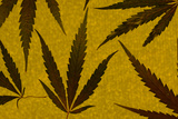 An Assortment of Marijuana Leaves Against a Yellow Speckled Background