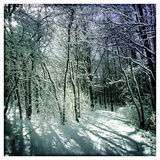 Snow Covered Canopy of Trees over a Cross Country Trail