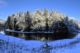 The Ausable River Winds Past Sunlit  Snow Covered  Evergreen Trees
