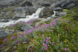 A Mountain Stream Cascading over Boulders and Past Wildflowers in Bloom