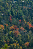 Fall Colors on Mount Desert Island