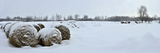 Snow Covered Bales of Hay in a Field on Howe Island