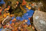 Brilliant Orange Leaves Resting on Rocks in the Fall