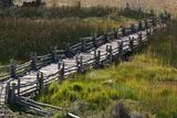 Sunlight on a Boardwalk Through a Marsh