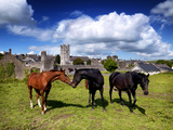 Horses Outside Fethard in County Tipperary