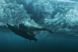 Underwater View of a Surfer in Waipi'O Bay