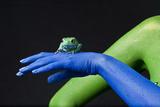 A Waxy Monkey Frog  Phyllomedusa Sauvagii  Sits on a Blue Hand