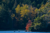 Fall Colors around Echo Lake on Mount Desert Island