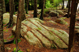 Trees and Rocks in a Forest Understory in Acadia National Park