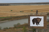 An Image of a Grizzly Bear in What Was Once Grizzly Bear Habitat