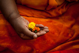 A Man Makes an Offering of Marigolds During the Kumbh Mela Festival in 2013