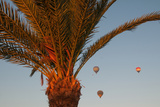Hot Air Balloons Behind a Palm Tree in the Valley of the Kings Near Luxor
