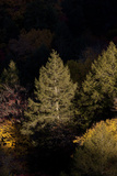 Evergreen and Other Trees Illuminated at Night