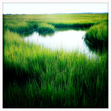 Chesapeake Bay Salt Marsh Near Poquoson  Virginia