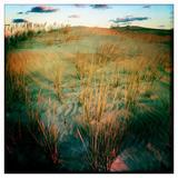 Sea Oats in the Dunes of Jockey Ridge State Park