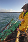 Handling the Dredge Aboard an Oyster Dredger  in Carrick Roads  Near Falmouth  Cornwall