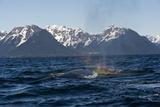 A Humpback Whale Spouting Off the Mountainous Coast of Alaska