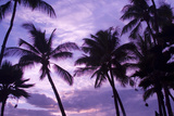 Silhouetted Palm Trees Against a Purple Sky