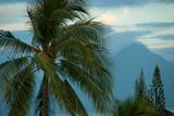 Palm Trees in Bora Bora