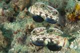 Marine Life in the Wayag Island Region of Raja Ampat