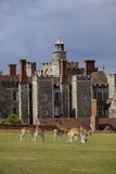 The Knole House Deer Park from the Era of King James