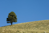 A Lone Tree on the Top of a Hill