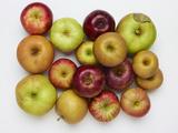 Heirloom Varieties of Apples