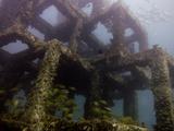 Fish School under an Artificial Reef in Thailand